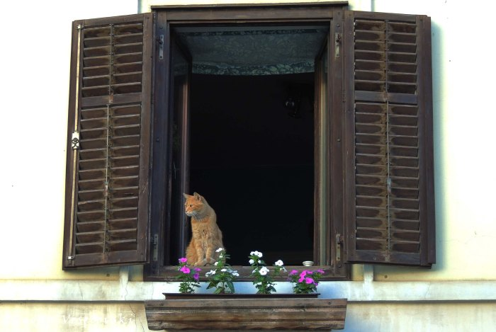 10. Window cat