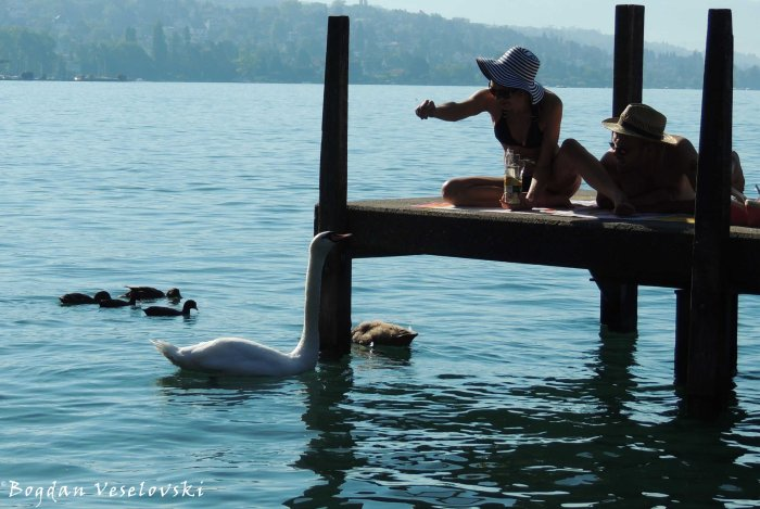 16. Feeding the swan on Lake Zürich