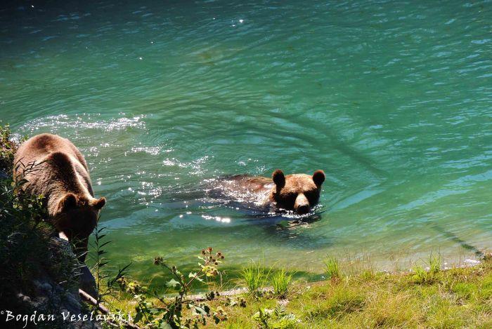 22. Bear Pit (Bärengraben)