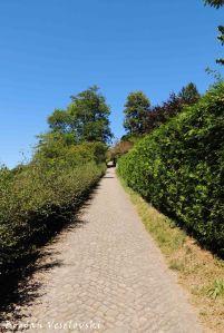 24. Towards Rose Garden (Rosengarten)