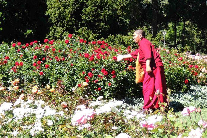 26. Rose Garden (Rosengarten)