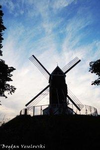 43. Koeleweimolen De Coelewey Windmill Windmill