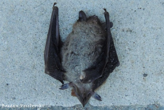 46. R.I.P. Bat