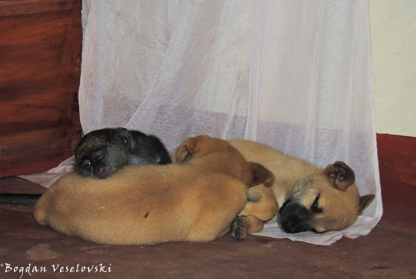 Sleeping all together