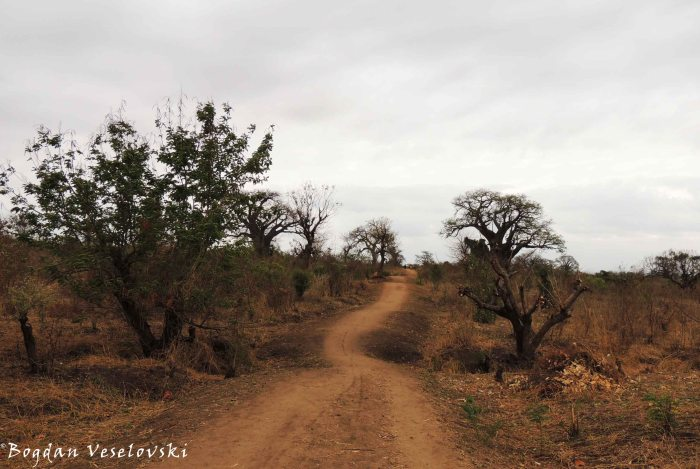 Chididi-Nsanje trekking road (through Mchacha)