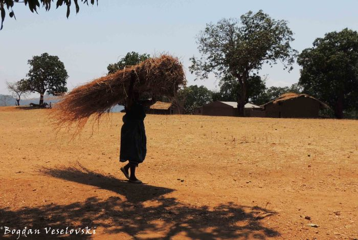 Carrying dried grass