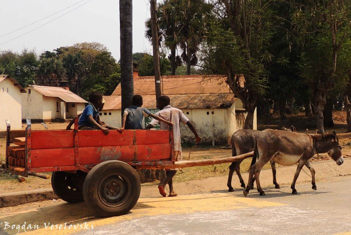 Donkey transportation in Chicwawa