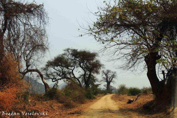 Nsanje-Chididi car road