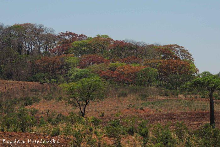 Nyandandanda forest