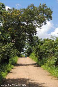 Road in Masimo
