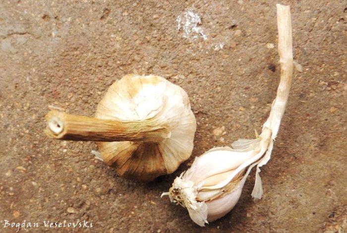 Adyo (garlic from Limbe)