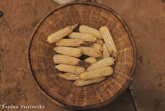 Chimanga (maize)