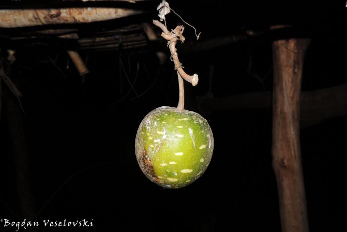 Chipuzi (Lagenaria sphaerica)