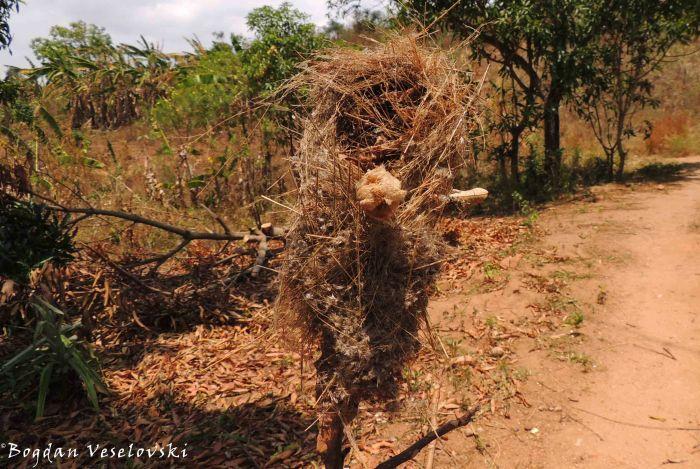 Chisa cha mbalame (bird nest)