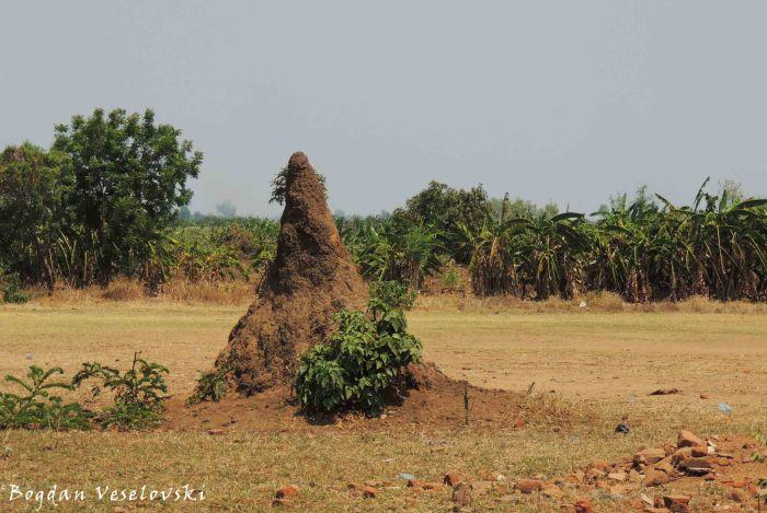 Chulu (termite hill in Nsanje)