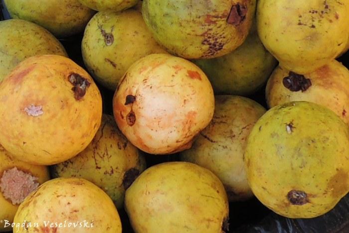 Gwafa (guava)
