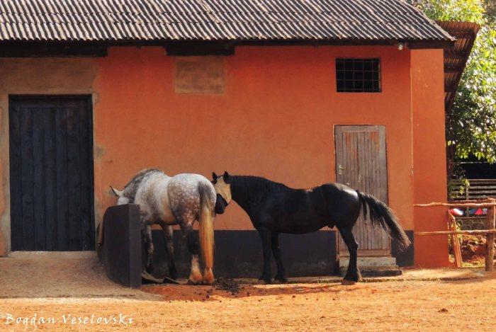 Mahatchi (horses in Zomba)