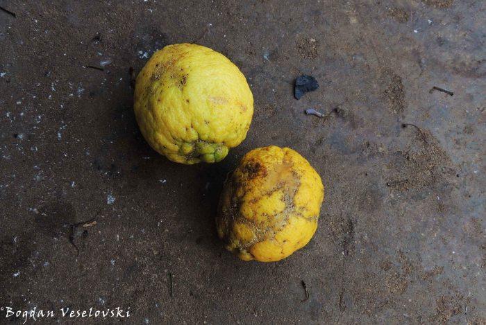 Mandimu (lemons from Limbe)