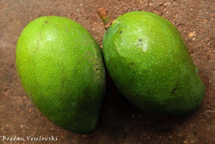 Mango (green mangos)
