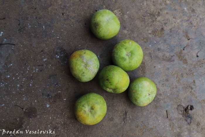 Masuku (sugar plum. uapaca kirkiana)