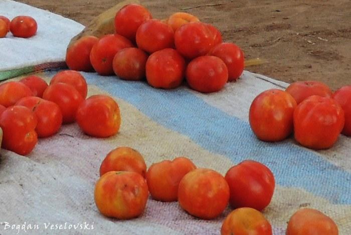 Matimati (tomatoes. lycopersicon lycopeersicum)