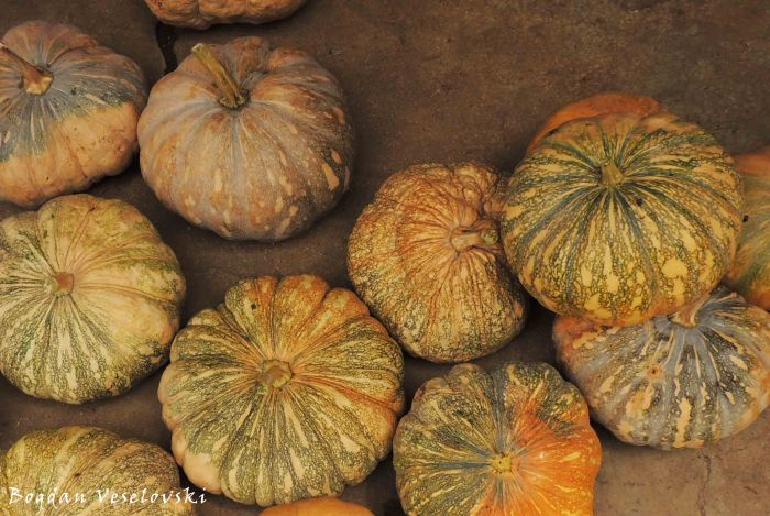 Maungu (pumpkins in Nsanje)