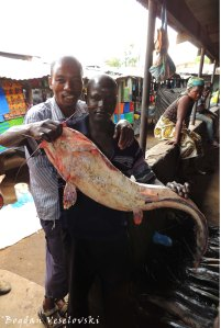 Mlamba (catfish)