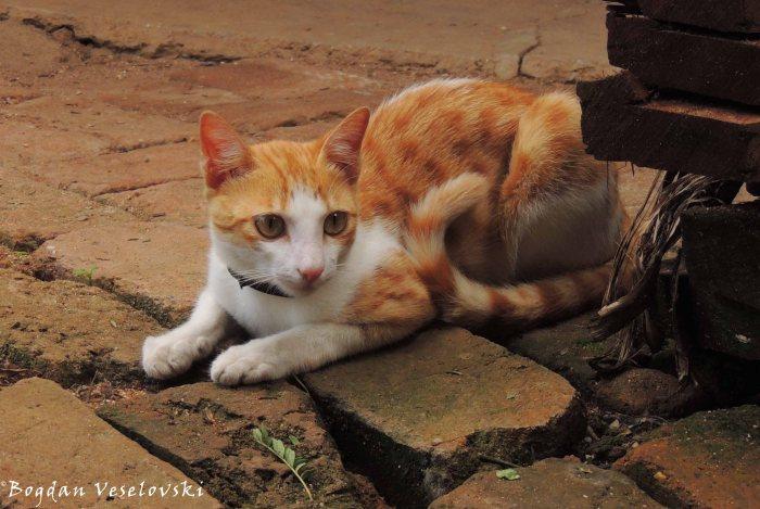 Mphaka (cat)