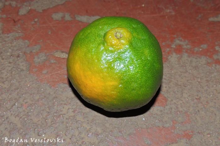 Nachesi (tangerine)