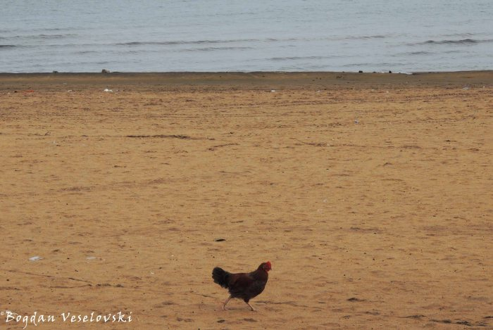 Nkhuku (Hen on the beach)