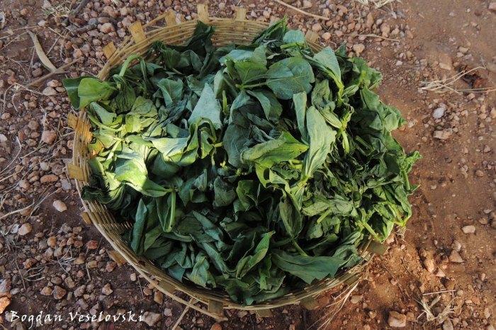 Nkhwani (beans leaves)