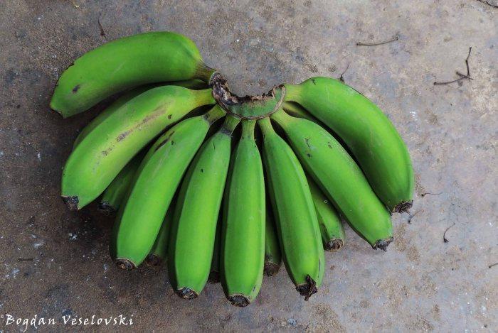 Nthochi (green bananas)