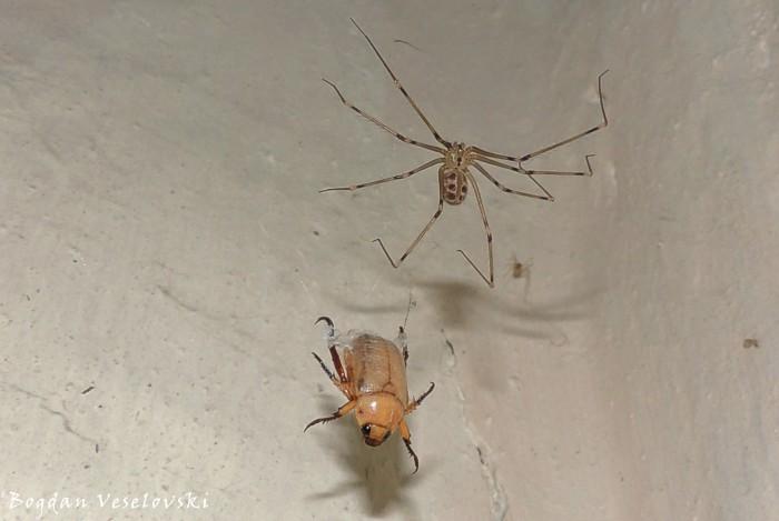 Spider & beetle