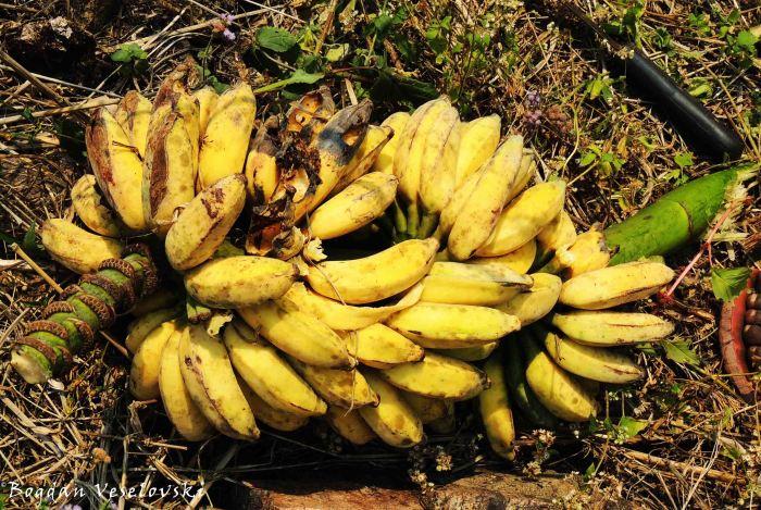 Zanda (sweet bananas)