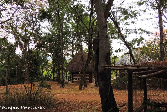 'Botanical' garden