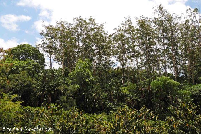 'Jungle'