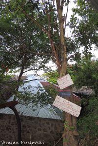 Mswaya (natal mahogany) & Kachere (wild fig)