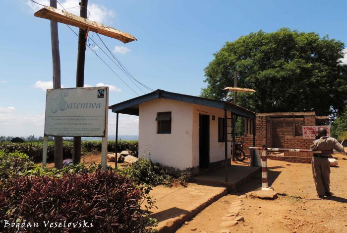 Satemwa Tea Estate