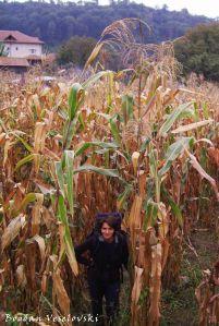 Big maize