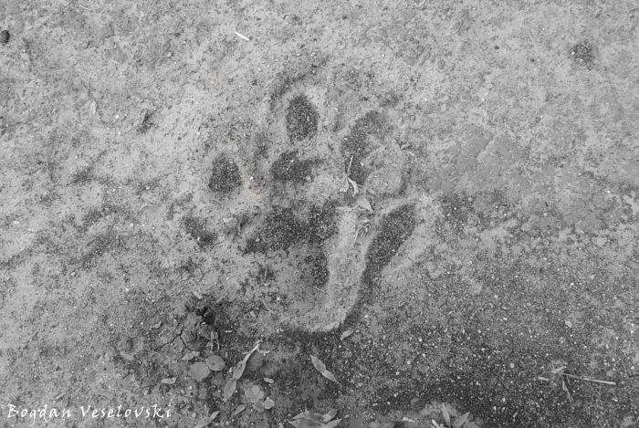 Hippo footprint