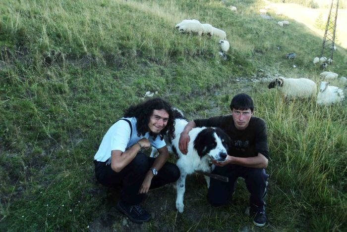 Together with the young shepherd and the fluffy shepherd