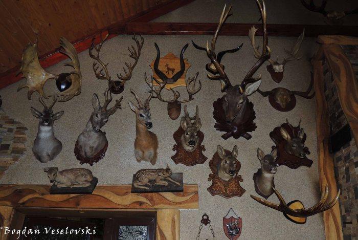 Hunting trophies at Safari Restaurant