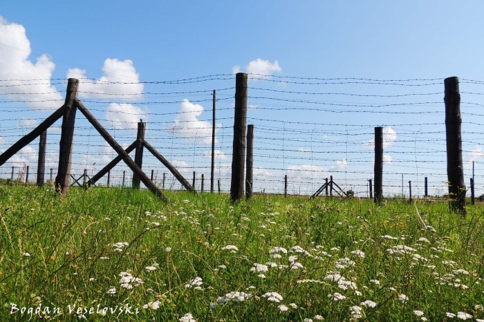 Barbed-wire fences