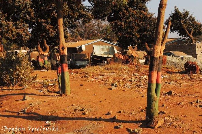 Malawian trees