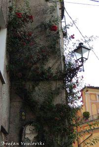Porta Rose's Roses