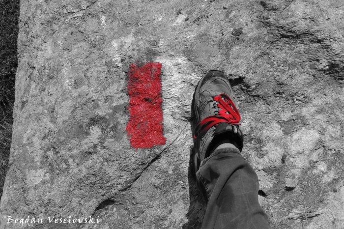 Follow Red