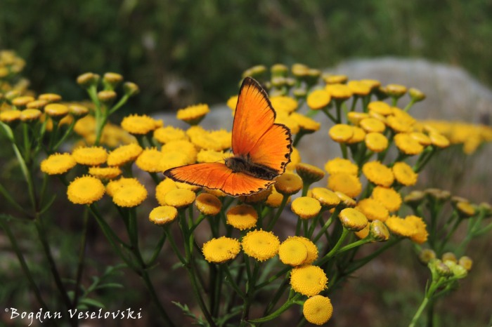 Butterfly attraction