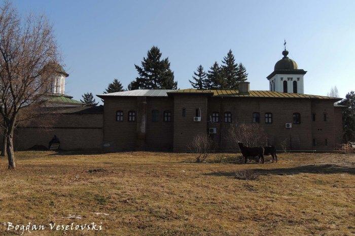 Plumbuita Monastery - cows