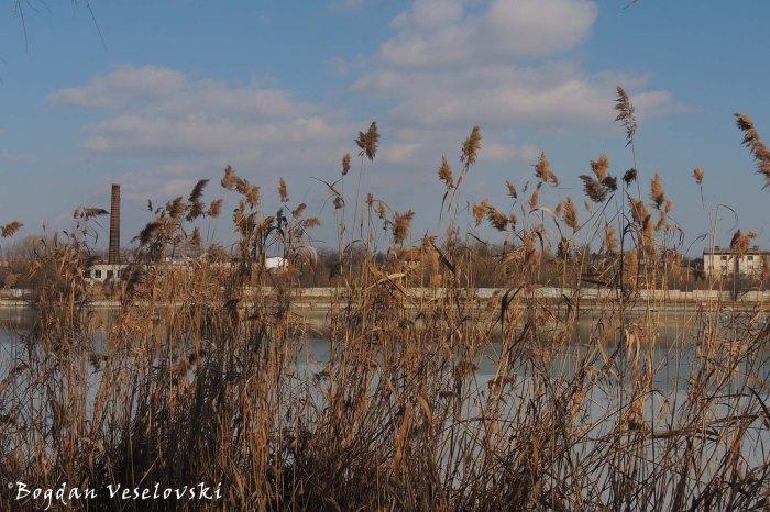 Reed - Plumbuita Lake