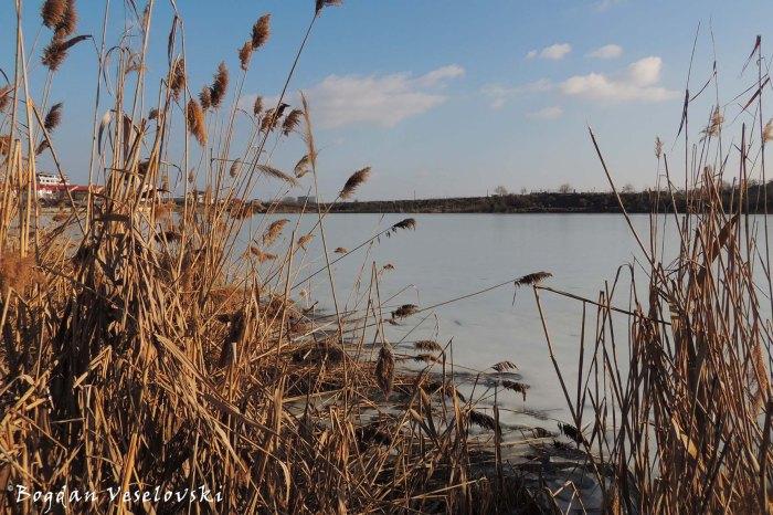 Reed - Fundeni Lake